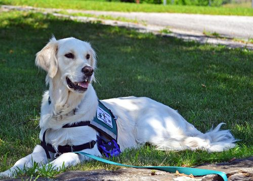 Giving Credit to Service Dogs | Credit Critics
