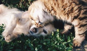 Cat and Dog Laying Together