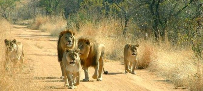 Africa 2012:  Kenya, Tanzania, South Africa – a family adventure itinerary