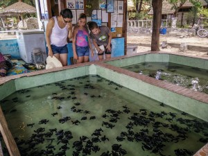Turtle farm and sanctuary