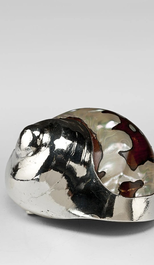 Turban Silver Shell