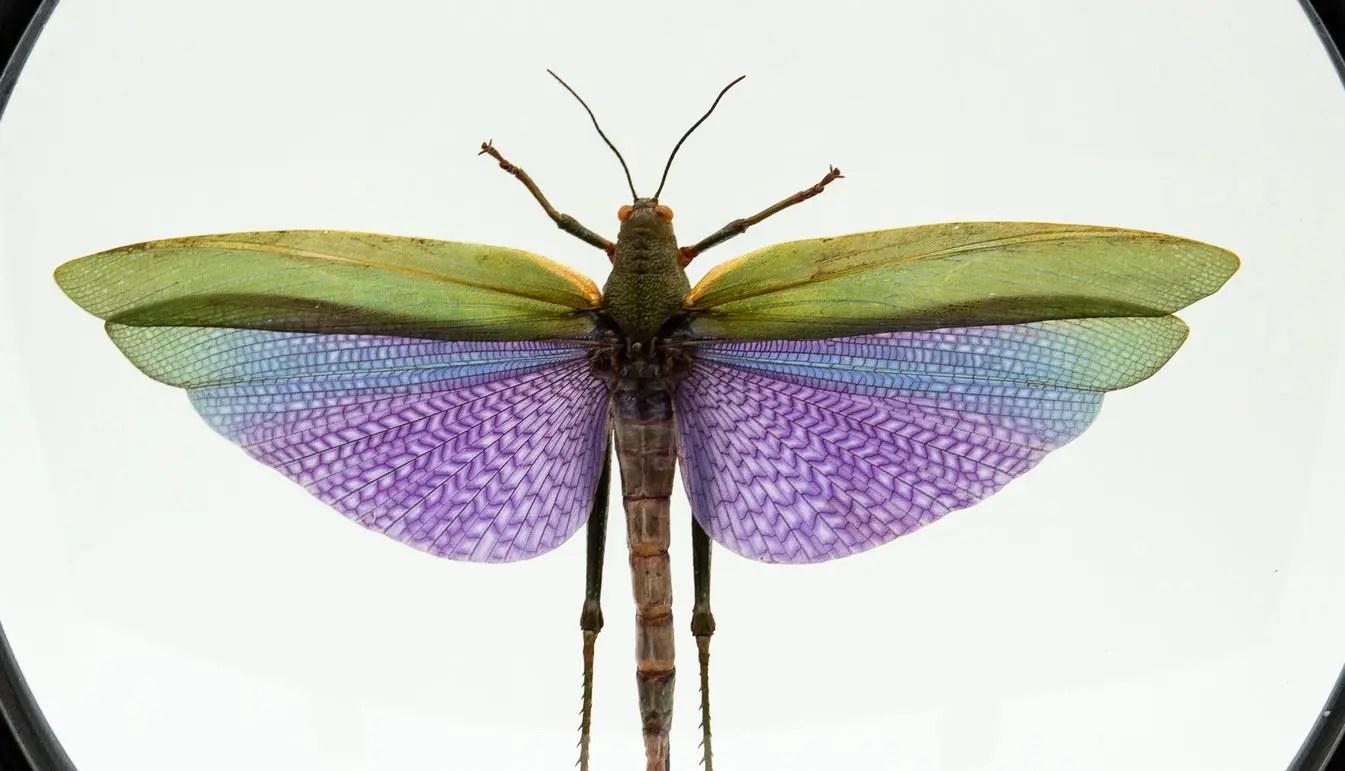 Zoom on Purple Locust in Round Reliquary