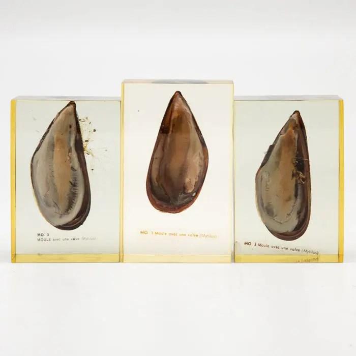 Pierre Giraudon Set of Three Mussels Encased in Resin