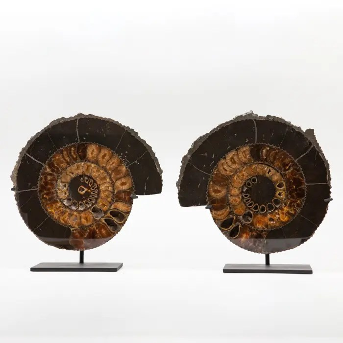 black-ammonite-slice-pyrite