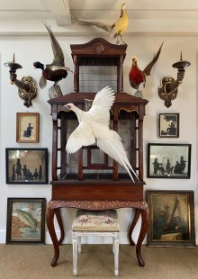 Interior of shop showing bird cage with mounted taxidermy animals