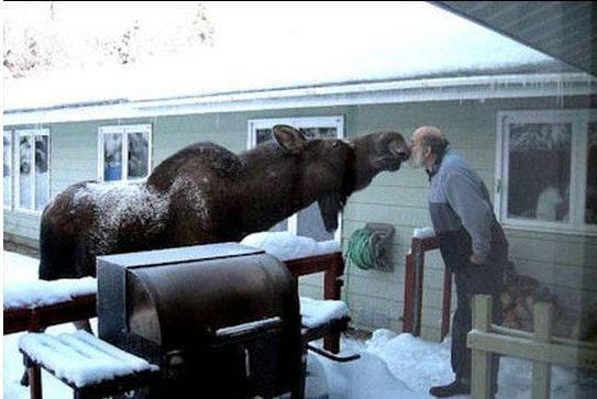 Another miniminal pair from Solomon: tânisi nîci-môs - hello my fellow moose; tânisi nîcimos - hello, my sweetheart