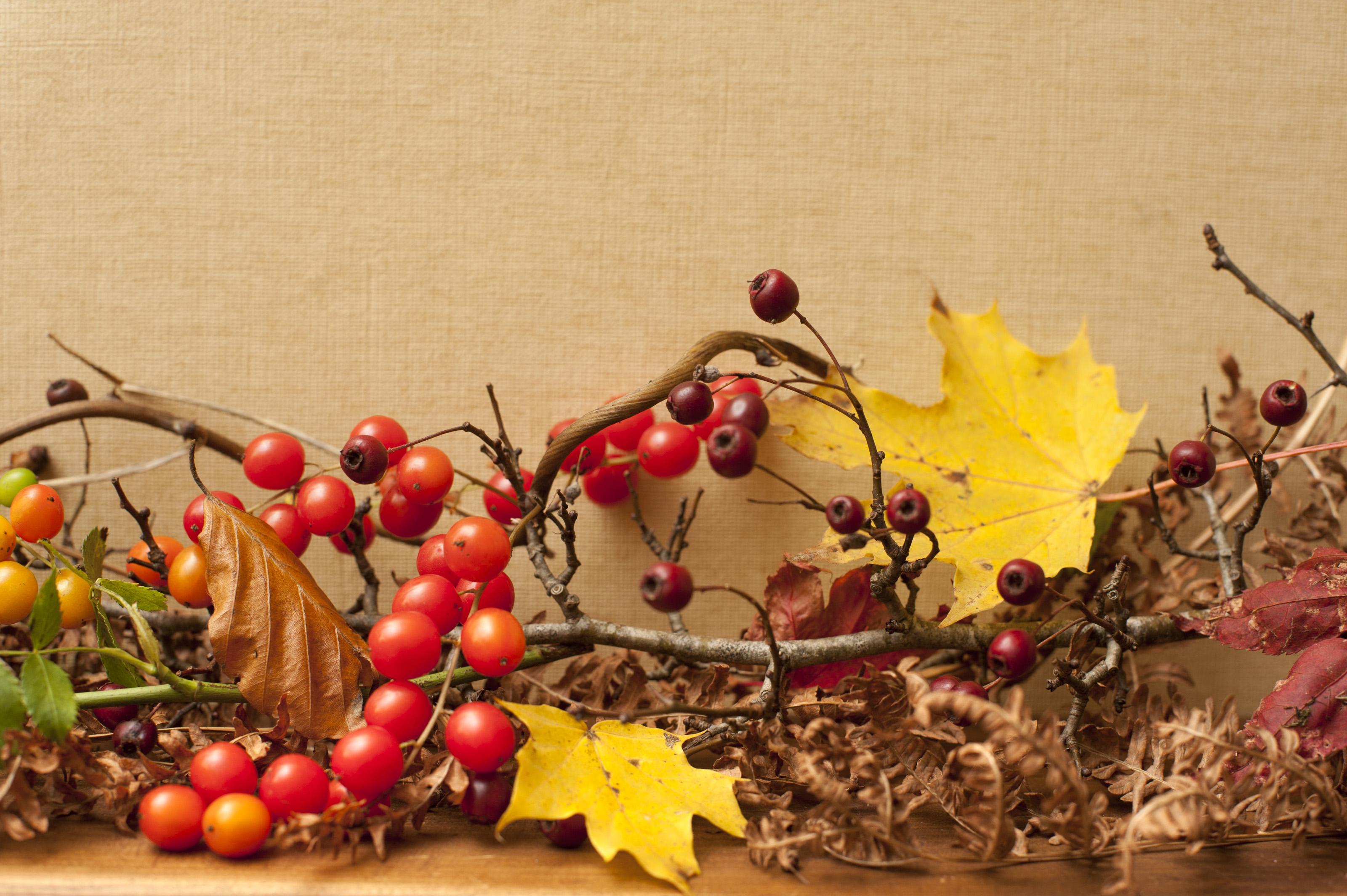Image Of Autumn Or Fall Berries And Leaves