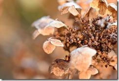Fleur en hiver