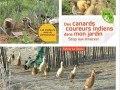 Des canards coureurs indiens dans mon jardin de Sylvie La Spina