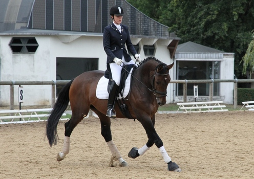 dressage-cre-hauts-de-france