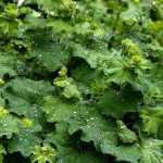 Collagene vegetale: esiste realmente?