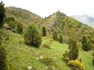 Crémenes, El Sabinar, desde Serrialba 1 mayo 2011 7606
