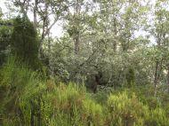 Crémenes, sabinar, roble (quercus robur), brezo 8642