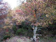 Crémenes, bosques de roble y haya, Aviao 20 nov 2014 9863