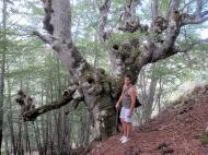 Crémenes, hayas en la Sierra del Castillo 18 agosto 2010 3936