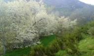 Primavera 2015 21 de abril, foto de Carlos