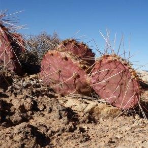 escalade dans le désert, ouest américain