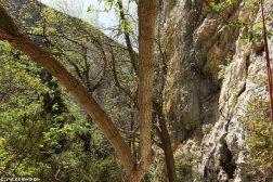 falaise d'ombleze, escalade à Ombleze