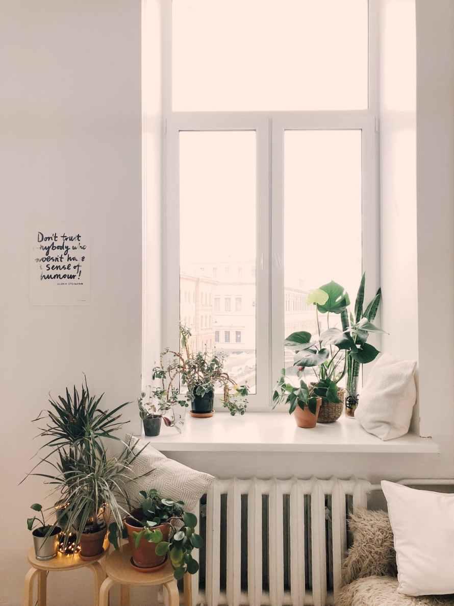 decoração-com-planta