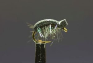 Size 20 Beetle Pattern