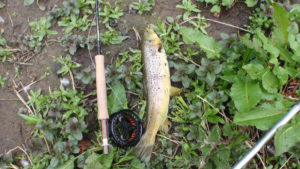 Cressbrook caught fish