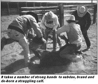 Ranchin' Rhythms: Branding (June 2002)