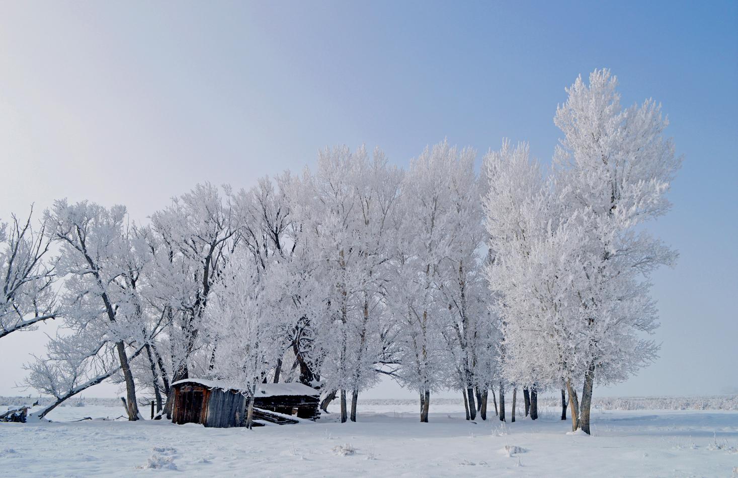 Hoar Frost & Old Cabin