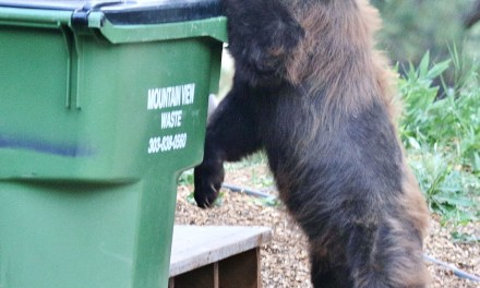 Crestone residents need to stay 'bear aware' through November