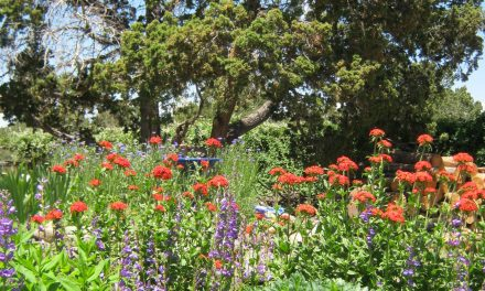 Garden Guru: Why does your garden matter?