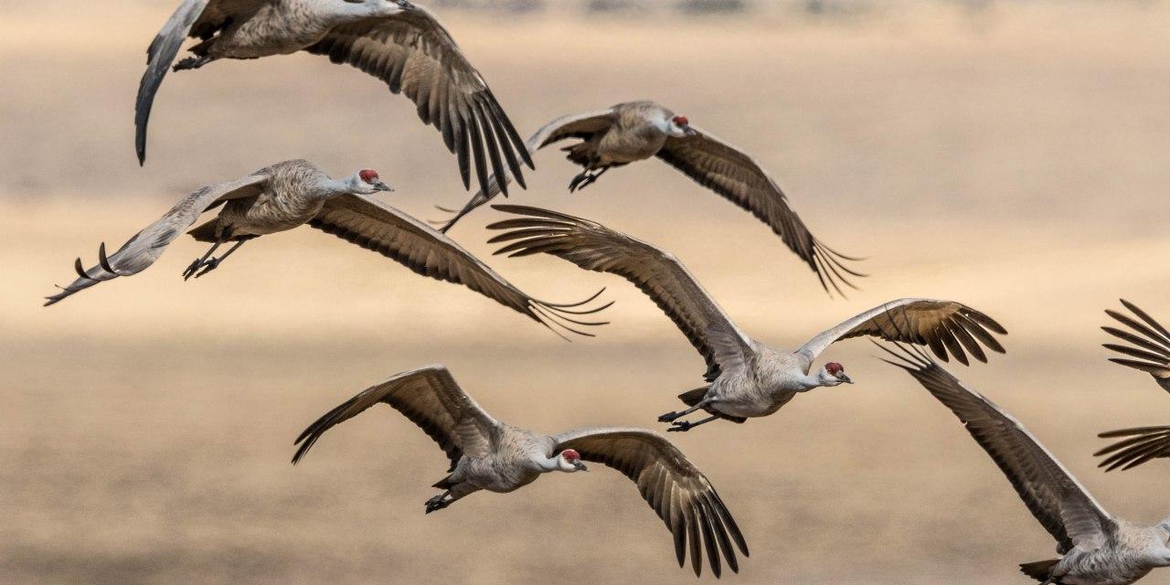 The Crestone Eagle: March 2021
