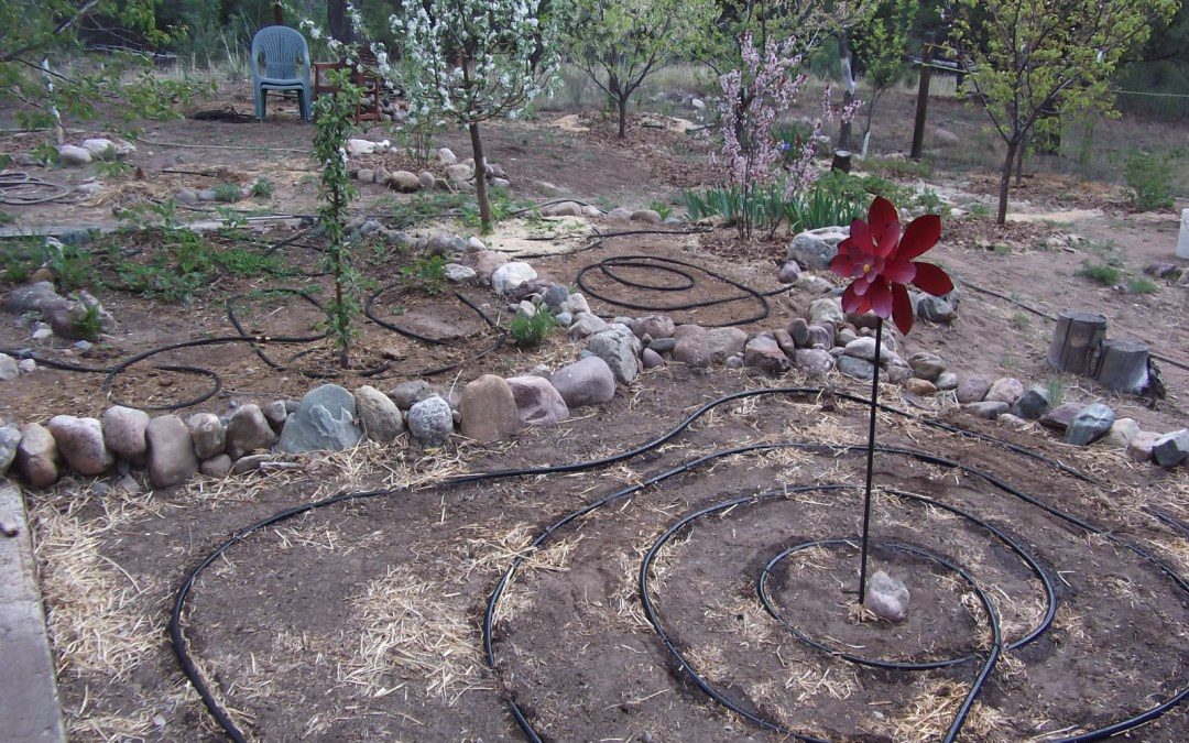 Garden Guru: Conserving precious water