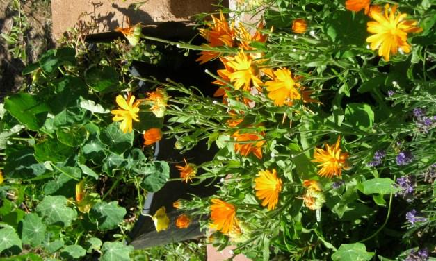 Garden Guru: Achieving Balance