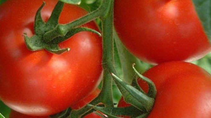 Ντομάτες