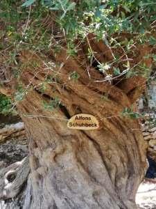Baum Schuhbeck Schild
