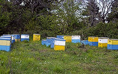 Ενίσχυση μελισσοκόμων & χοιροτρόφων