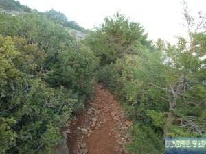 Trees and plants on Crete