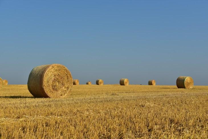 mindestlohn landwirtschaft