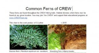 common ferns of crew george`common ferns of crew george``
