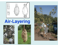 Air-Layering Presentation