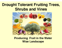 Drought Tolerant Fruiting Trees, Shrubs and Vines Presentation