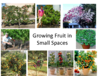 Growing Fruit in Small Spaces Presentation