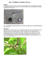 How To Pollinate Cherimoya Presentation