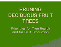 PRUNING DECIDUOUS FRUIT TREES CRFG 2010 Presentation