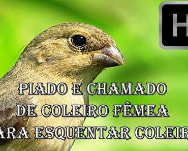 FÊMEA DE COLEIRO CHAMANDO E PIANDO MUITO