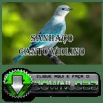 Sanhaço Canto Violino