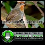 Uirapuru Verdadeiro