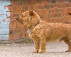Cachorro SRD: 4 fatos que você não sabia sobre eles