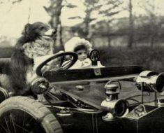 Cachorros famosos: 4 pets que entraram para a história