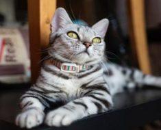 Caixa para gato: por que escolher uma para o seu pet?