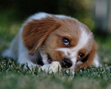 Família com criança? Conheça 11 raças de cachorros dóceis